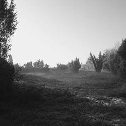 Black/Silver/White landscape