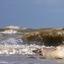 Wijk aan Zee(hond)