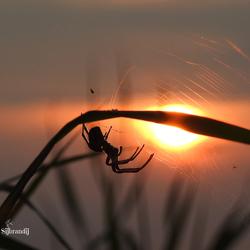 Spin in de zonsondergang