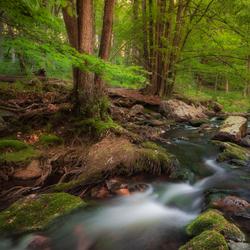 Fairytale Forest - La Hoëgne