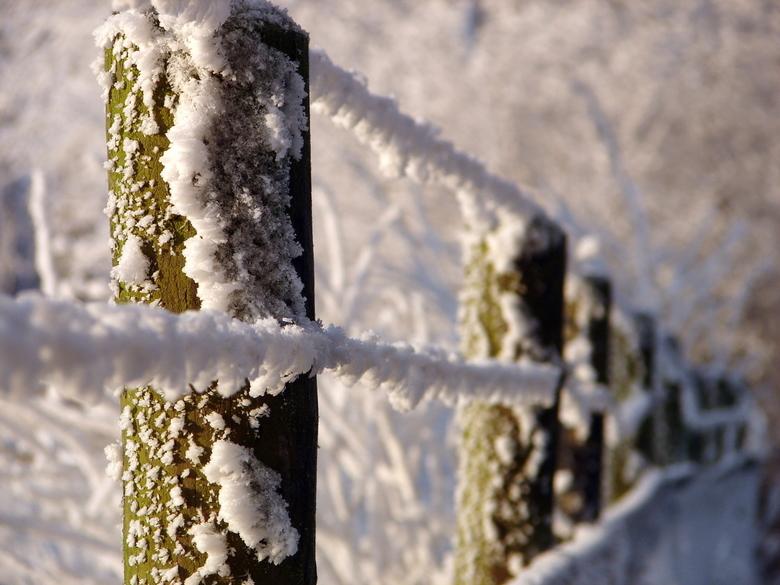 winter - de foto is gemaakt in Westmaas.