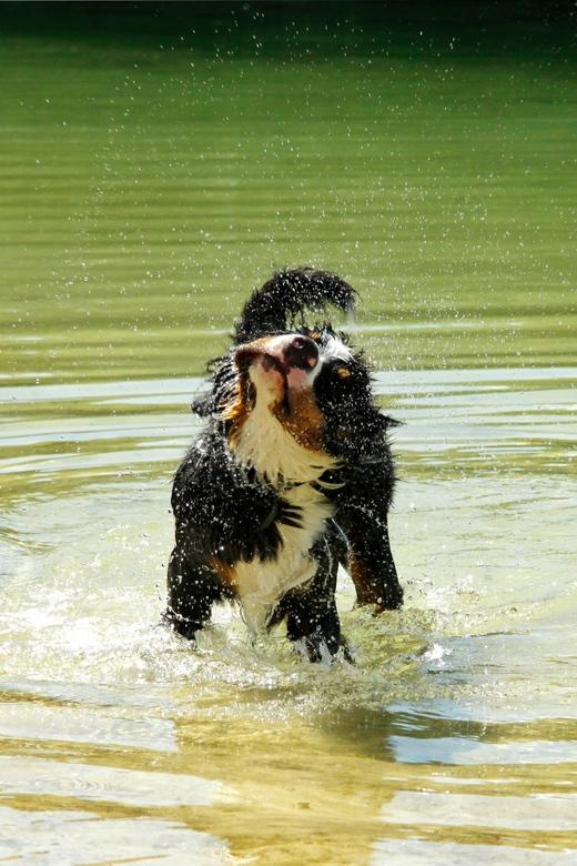 Waterfun -