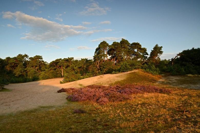 Ochtendstond - Beerze Nederland, Natura 2000 gebied