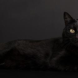Beautiful in Black