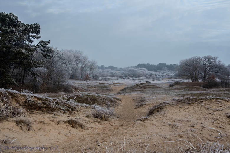 It's wintertime - Vandaag was het genieten van het berijpte landschap ook hier in Den Haag. Het zag er prachtig uit net een sprookje jammer dat het ni