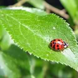 perfect ladybug