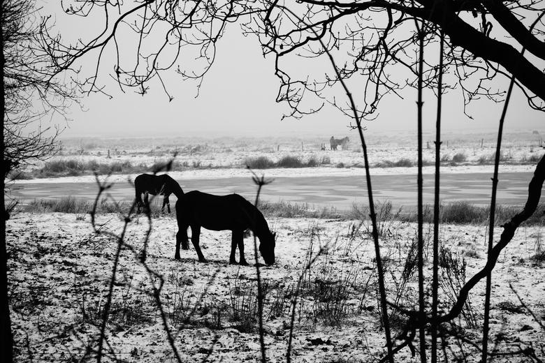 Silhouette - Markiezaatsmeer - Winters plaatje, genomen aan Markiezaatsmeer nabij Bergen op Zoom. Zwartwit foto om de silhouettes te accentueren.