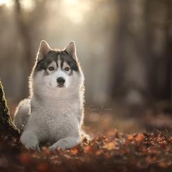 Rim licht om hond