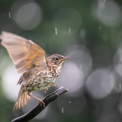 I'm singing, and dancing in the rain!!