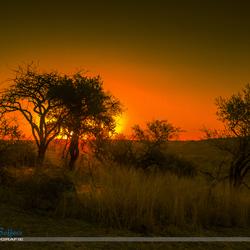 Africa sundowner