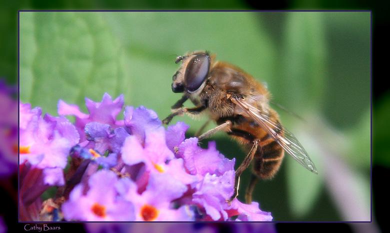 Bij op vlinderstruik - Een van mijn eerste pogingen tot macro fotografie. Deze foto is gemaakt met een 300 mm lens op een afstand van 50 cm. Hierdoor