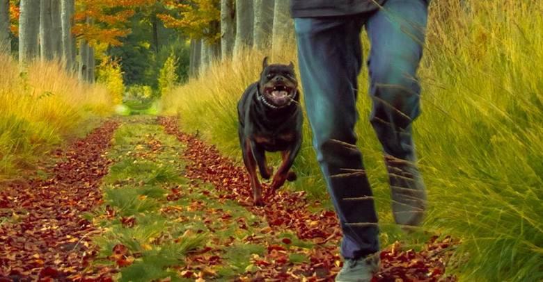 Run for your liiife!! -