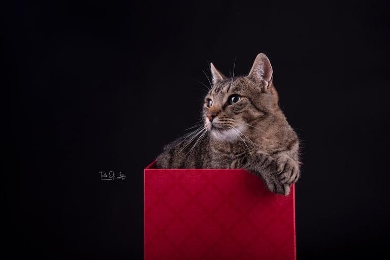 Cat In A Box -