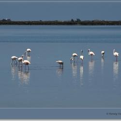 Flamingo's - Etang de Vaccarès