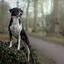 Hondje op haar troon