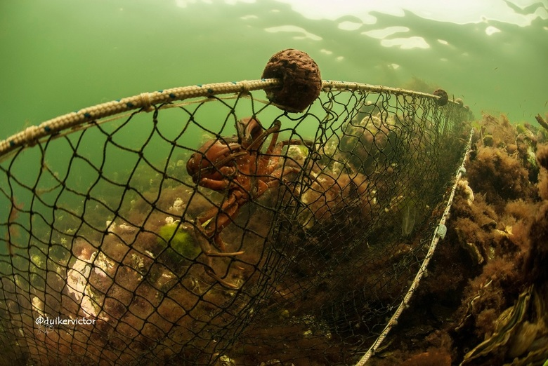 Navy seal of just a crab ? - I am a crab but feel like a navy seal after climbing this net.