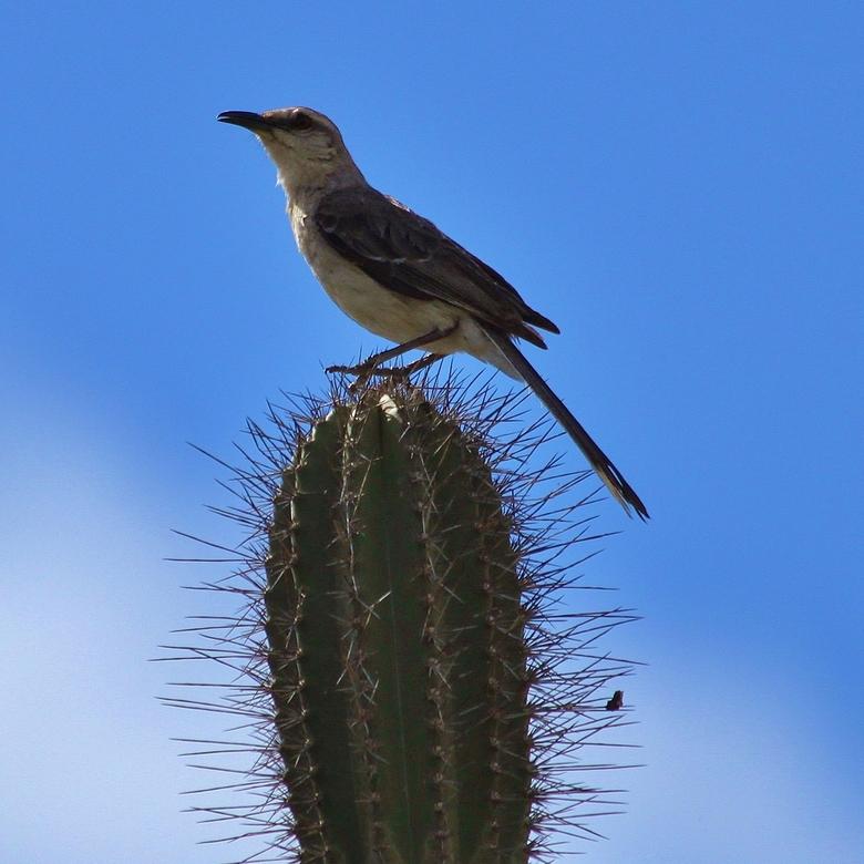 Auw! - Vogel genomen op Bonaire.
