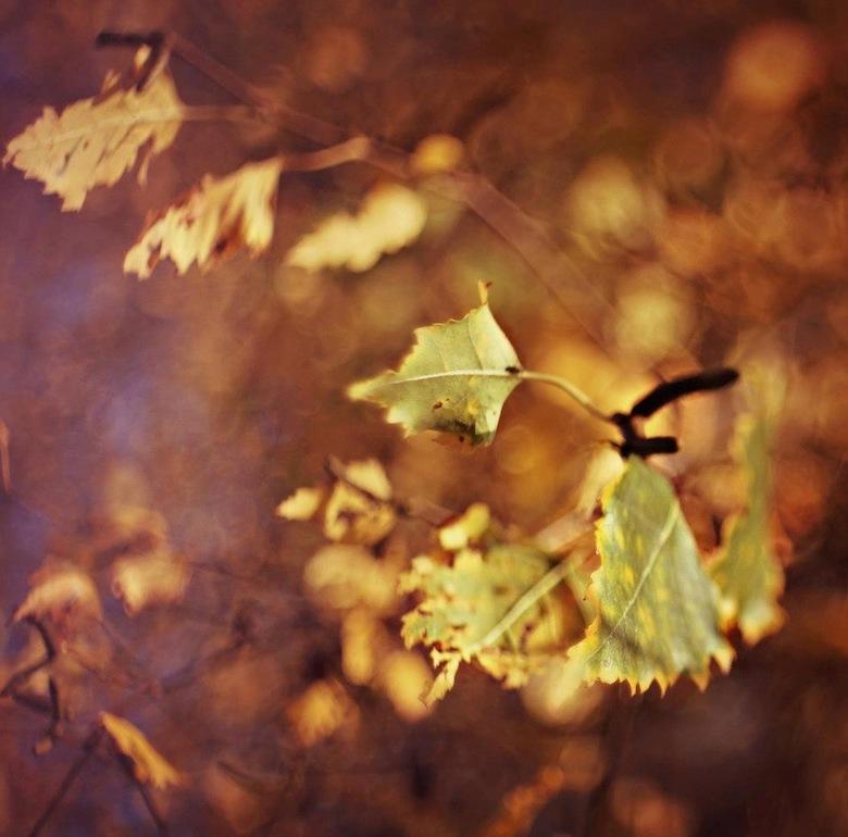 Autumn - Autumn