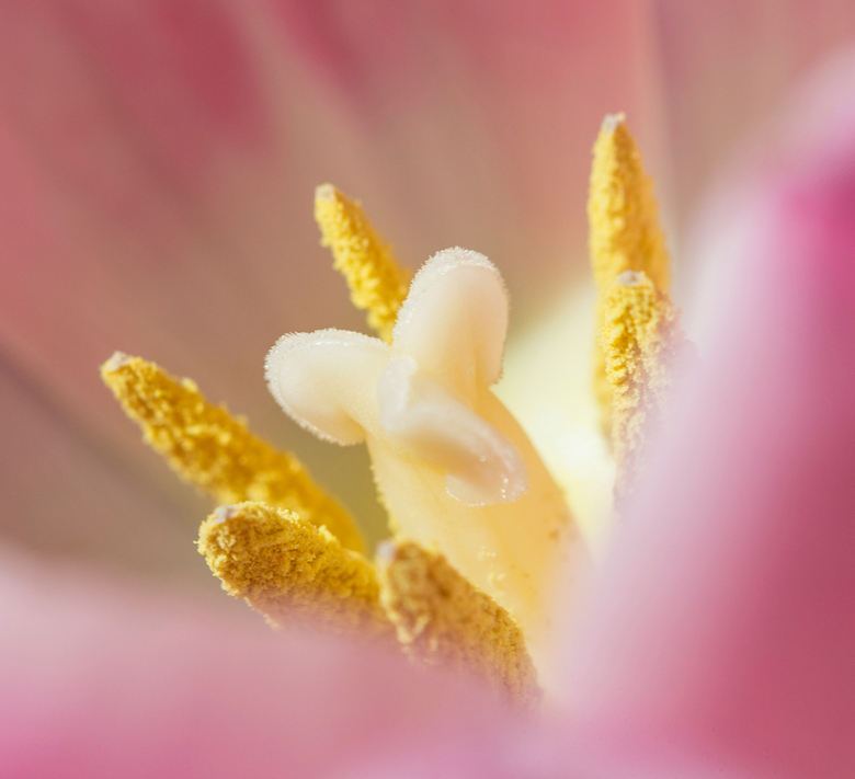"""Tulpen hart - Het is natuurlijk weer tijd voor een tulpen foto<img  src=""""/images/smileys/smile.png""""/>"""