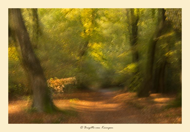 Speuld revisited - Gister heerlijk in het Speulderbos vertoefd met Karin (Kariver) Doris (Dodsi) en Birgitte (Birgitte61).<br /> De herfst verkleurin