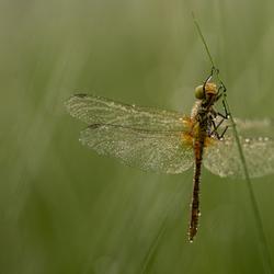 libelle-