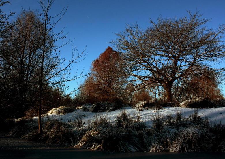 Frozen Nature - Een winterse natuurkiekje.