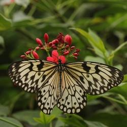 Vlinder bij vlindorado