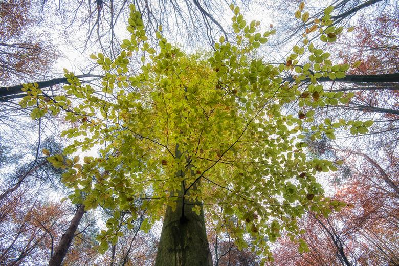 herfst kleurenpalet -