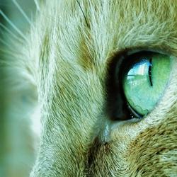 Mijn kat Pluis