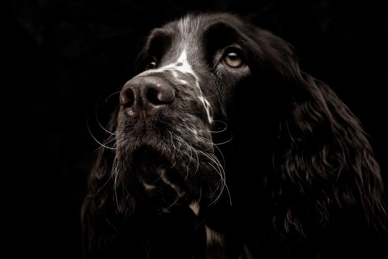 Dark Doggie - Gisteren even mijn hondje voor een zwarte achtergrond gezet.. ik vond deze zelf wel aardig gelukt..
