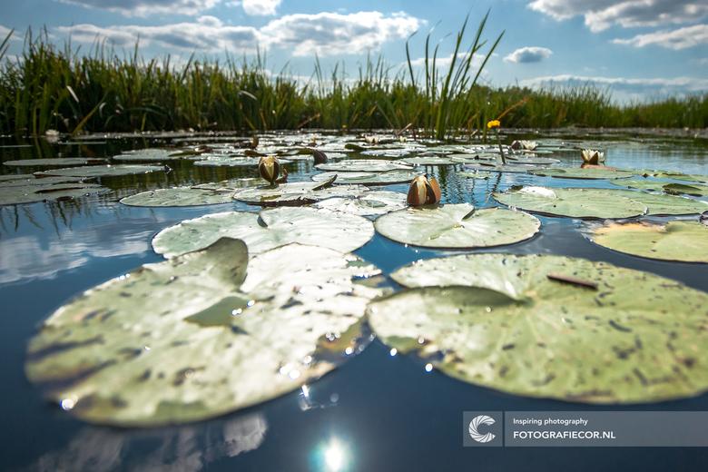 Zomerse dag in de Weerribben - Even dat moment dat er niks is. Een dobberend bootje in een Hollandse waterweg met witte stapelwolken en blauwe luchten