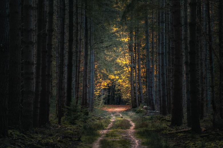 Pad naar de herfst - Pad in het Speulderbos.