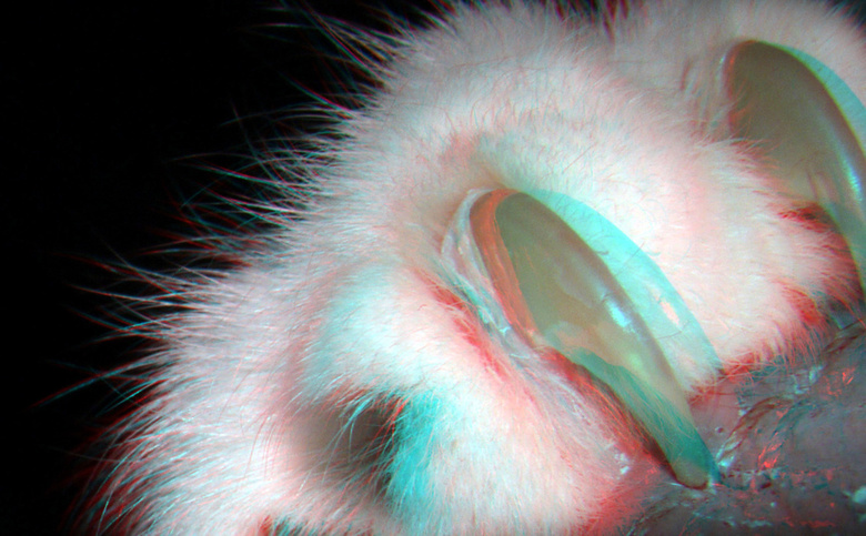 Klauwtje kat op bank 3D macro Lumix H-FT012 - H-FT012 GF3 Lumix +10<br /> modificeerd