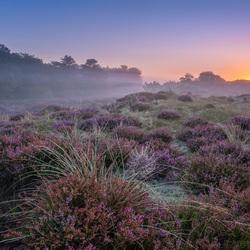 Heide aan de kust in de mist