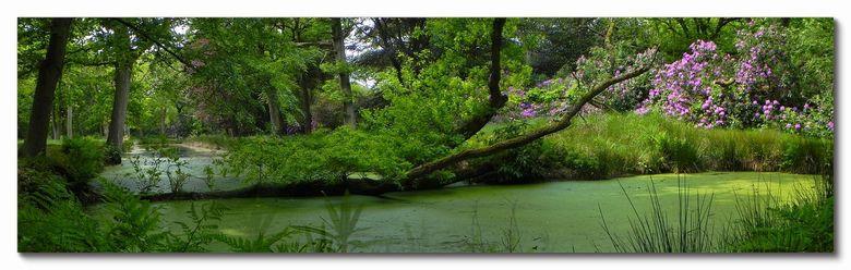 Westhove 4 - Vanmiddag tegen de 25 graden in het bos bij kasteel Westhove tussen Domburg en Oostkapelle. Prachtig stukje Rhododendronbos!<br /> Pano