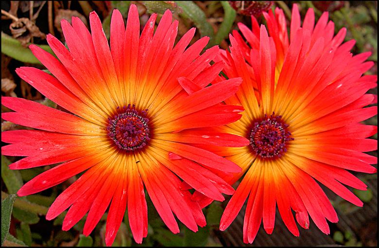 Fabulous mooie bloemen | Natuur foto van pzandbergen | Zoom.nl #CA45