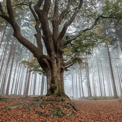 Mistige ochtend in het bos........