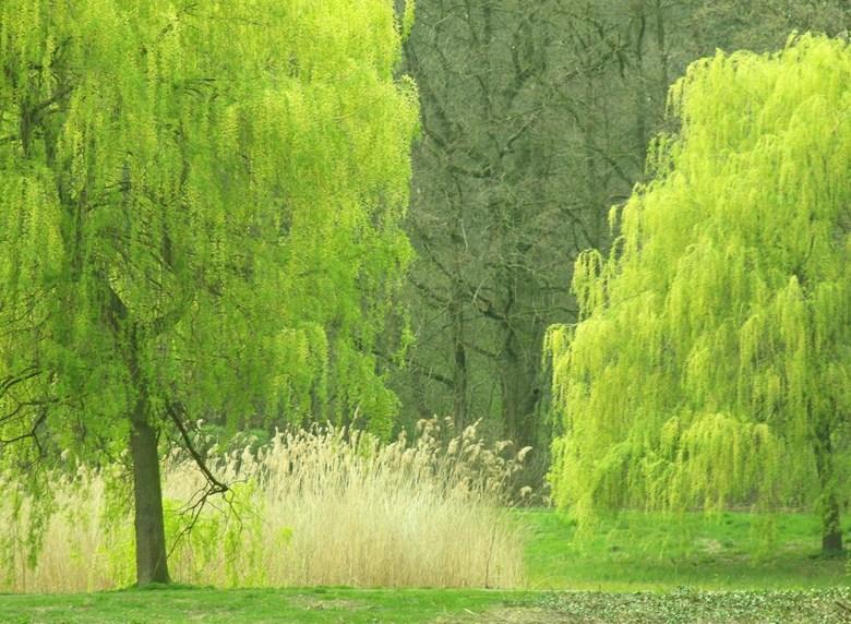 Voorjaar -