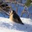 Putter in de sneeuw (2)