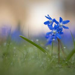 Rainy springtime