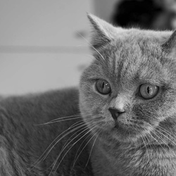Portret Poes