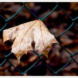 Eenzaam blad