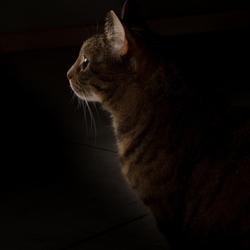 licht is heel interessant
