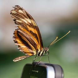 Butterfly meets modern technology