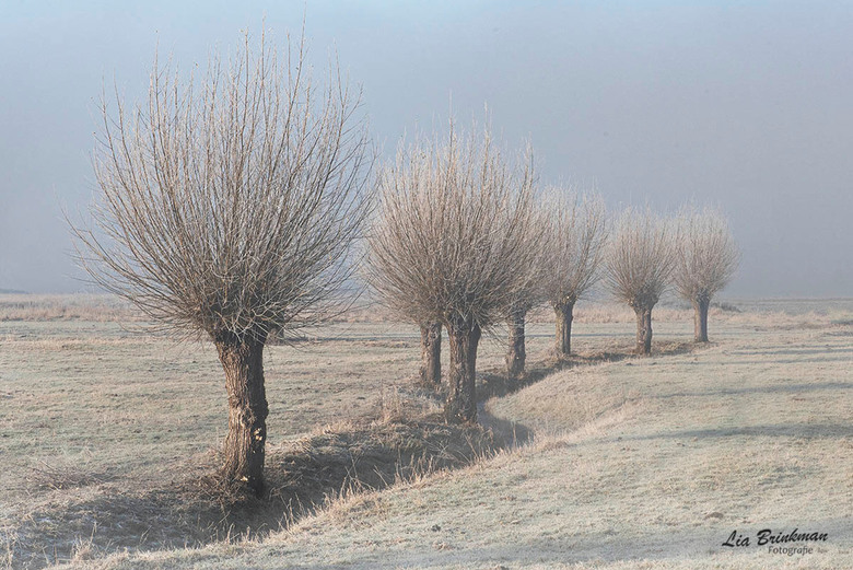 Winter !! - Winters landschap aan de uiterwaarden van de Rijn. Een prachtige ochtend met mist, rijp en zon. En dat te bedenken dat ik eigenlijk naar W