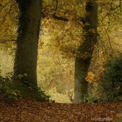 Het bos in de herfstsferen