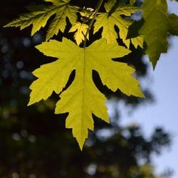 Een blad tijdens herfst.jpg