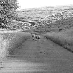 Waar heen lijd de weg