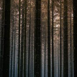 winters licht