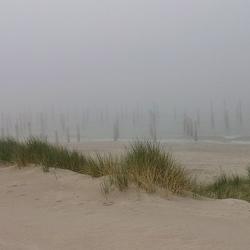 Palendorp Petten (NH) in the mist